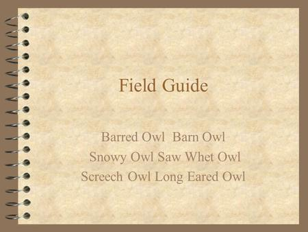Field Guide Barred Owl Barn Owl Snowy Owl Saw Whet Owl Screech Owl Long Eared Owl.