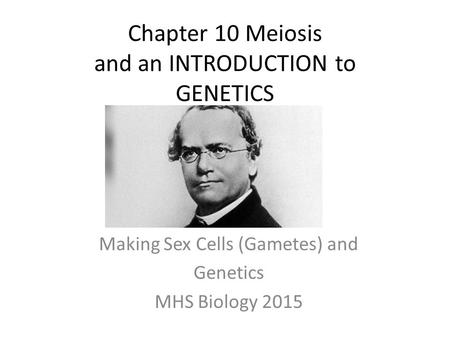 Chapter 10 Meiosis and an INTRODUCTION to GENETICS Making Sex Cells (Gametes) and Genetics MHS Biology 2015.