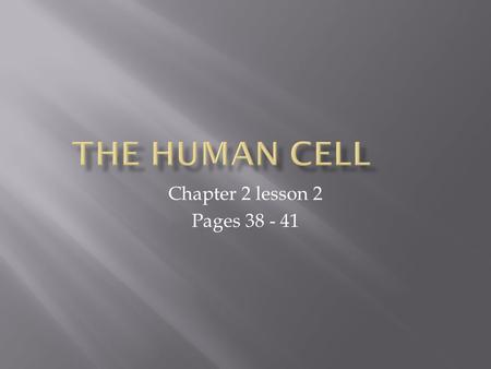 Chapter 2 lesson 2 Pages 38 - 41.  Differentiate among the different types of cells that make up the body.  Describe how the body is organized, from.