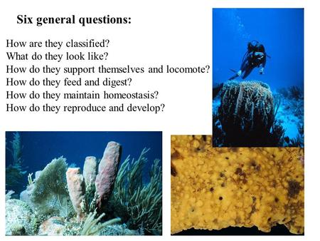 Six general questions: How are they classified? What do they look like? How do they support themselves and locomote? How do they feed and digest? How do.