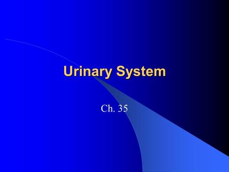 Urinary System Ch. 35. Urinary systems Helps maintain homeostasis – Maintains water balance Either blood or interstitial fluid is filtered, removing water.