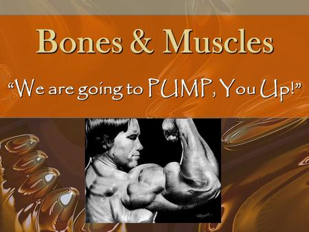 "Bones & Muscles ""We are going to PUMP, You Up!"" Skeletal System Without your skeletal system you would not have any muscle!!Without your skeletal system."
