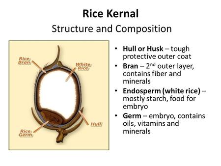 Rice Kernal Structure and Composition Hull or Husk – tough protective outer coat Bran – 2 nd outer layer, contains fiber and minerals Endosperm (white.
