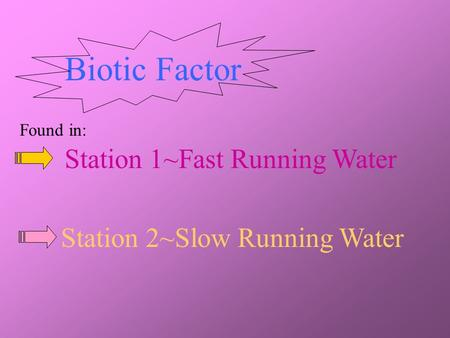 Biotic Factor Station 1~Fast Running Water Station 2~Slow Running Water Found in: