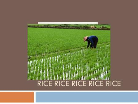 RICE RICE RICE RICE RICE. CAN YOU NAME THAT RICE….. Long Grain RiceShort Grain Rice Brown RiceWild Rice Instant Rice.