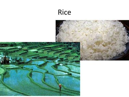 Rice. Long Grain Rice Short Grain Rice Conventional Rice.