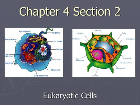 Chapter 4 Section 2 Eukaryotic Cells. 1. Even though most cells are small, cells are complex. 2. A eukaryotic cell has many parts that help the cell stay.