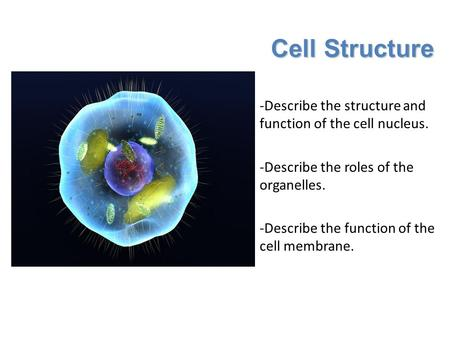 Cell Structure -Describe the structure and function of the cell nucleus. -Describe the roles of the organelles. -Describe the function of the cell membrane.