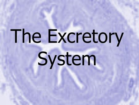The Excretory System. Excretory System Why do our bodies need to filter waste from the body? – –Maintain homeostasis – –Removal of harmful materials –