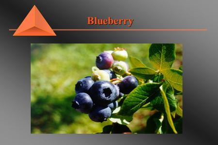 Blueberry Blueberry. Site Selection Blueberry pH 4.0 to 5.5pH 4.0 to 5.5 Full sun and well drainedFull sun and well drained Sandy loam with added organic.