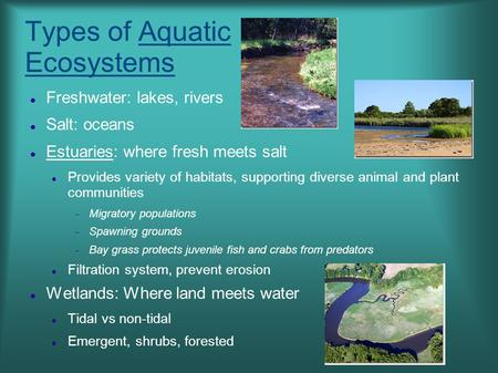 Types of Aquatic Ecosystems Freshwater: lakes, rivers Salt: oceans Estuaries: where fresh meets salt Provides variety of habitats, supporting diverse animal.