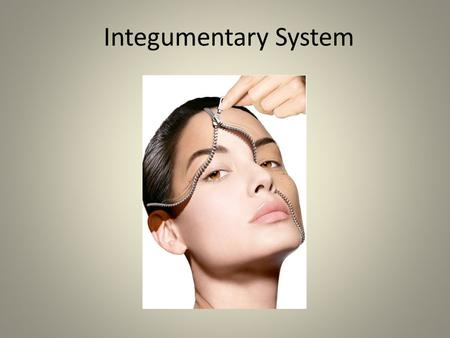 Integumentary System 1. Skin – Dermis and epidermis.