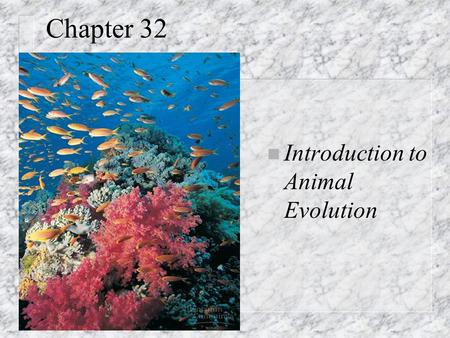 Chapter 32 n Introduction to Animal Evolution. Def: animal (n) Unique characteristics: n Heterotrophic eukaryotes; ingestion n Lack cell walls; collagen.