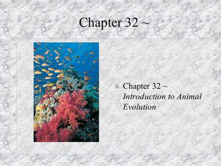 Chapter 32 ~ n Chapter 32 ~ Introduction to Animal Evolution.