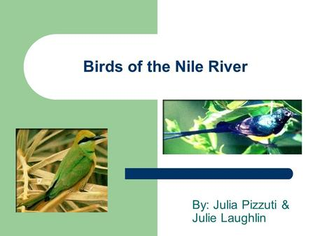 Birds of the Nile River By: Julia Pizzuti & Julie Laughlin.