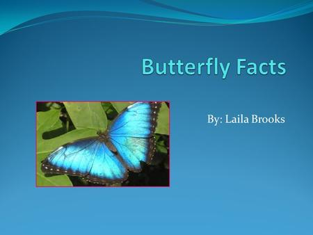 By: Laila Brooks. Species There are 20,000 species of butterflies in the world. About 725 species are in North America North of New Mexico. 575 are in.