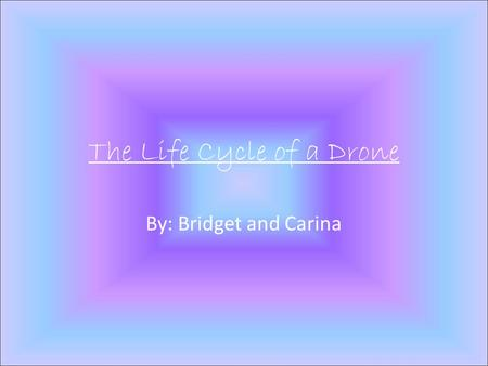 The Life Cycle of a Drone By: Bridget and Carina.