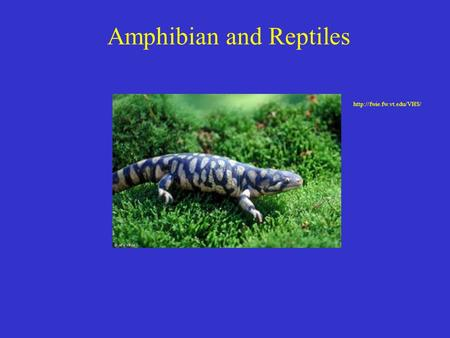 Amphibian and Reptiles