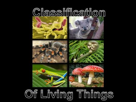 Read pages 6-7. Classification is the grouping of things according to characteristics. The science of classifying organisms is known as taxonomy. One.