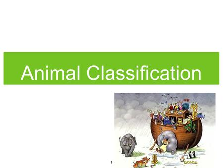 1 Animal Classification. 2 ANIMAL CLASSIFICATION There are many different types of animals in the world. Many animals are quite similar to each other.