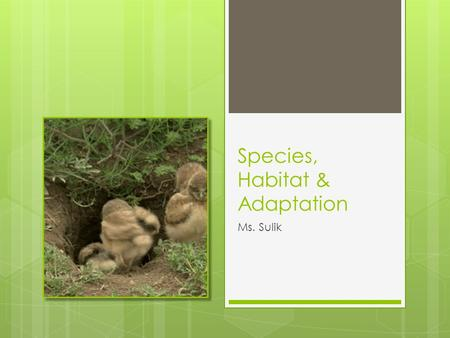 Species, Habitat & Adaptation Ms. Sulik. Outline  Correct and collect Taxonomy Worksheet  Notes: habitat and niche.