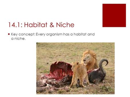 14.1: Habitat & Niche  Key concept: Every organism has a habitat and a niche.