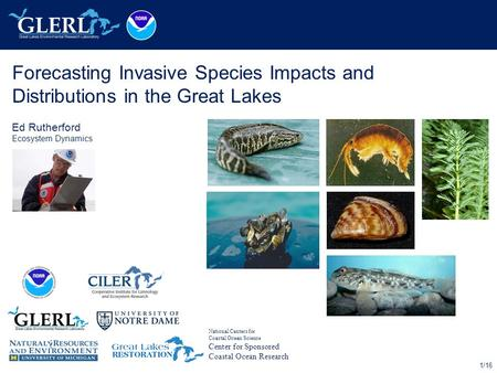 1/16 Forecasting Invasive Species Impacts and Distributions in the Great Lakes Ed Rutherford Ecosystem Dynamics National Centers for Coastal Ocean Science.