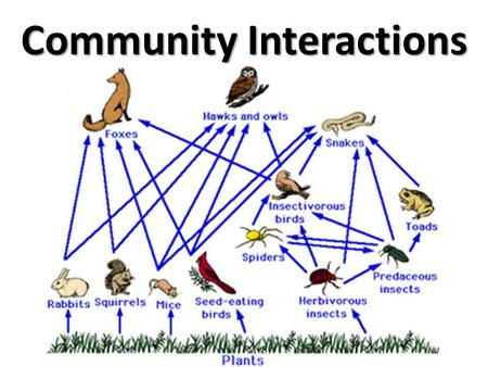 Community Interactions Community: Many different species interacting in the same environment. Three types of interactions: – Competition – Predation.