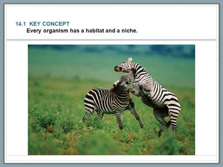 14.1 KEY CONCEPT Every organism has a habitat and a niche.
