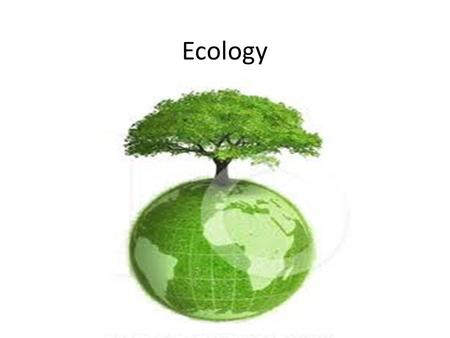 Ecology. Patterns in the Environment Where an organism lives is called it's Habitat. It is shaped by the organisms interaction with abiotic and biotic.