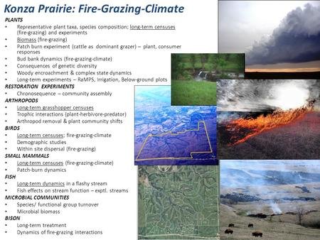 Konza Prairie: Fire-Grazing-Climate PLANTS Representative plant taxa, species composition; long-term censuses (fire-grazing) and experiments Biomass (fire-grazing)