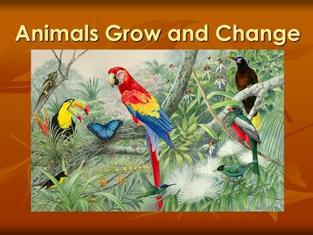 Animals Grow and Change. What do animals need to live and grow?  Fresh air  Food  Water  Shelter.