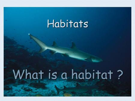 Habitats What is a habitat ?. A habitat is the place where living things live. A habitat is the place where living things live. The water provides support.
