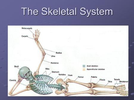 The Skeletal System. Word parts and Abbreviations Define each ankyl/o arthr/o chondr/o cost/o crani/o -desis kyph/o BPD CR Fx OA OP TMJ THA TJA TKA lord/o.