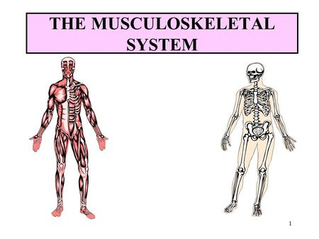 1 the musculoskeletal system 2 objectives name the parts of the, Human Body