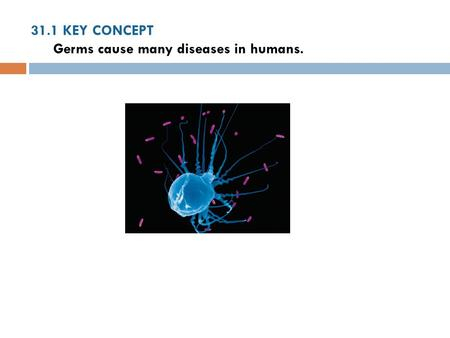31.1 KEY CONCEPT Germs cause many diseases in humans.