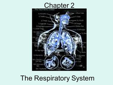 The Respiratory System Chapter 2. What is the main purpose of the respiratory system? GAS EXCHANGE –Inhaling oxygen, exhaling carbon dioxide Your LUNGS.