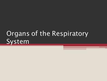 Organs of the Respiratory System. Introduction Respiration ▫ Entire process of gas exchange between the atmosphere and body cells ▫ Includes:  1. movement.