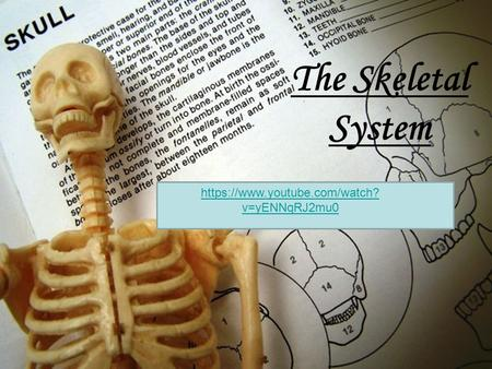 The Skeletal System https://www.youtube.com/watch? v=yENNqRJ2mu0.