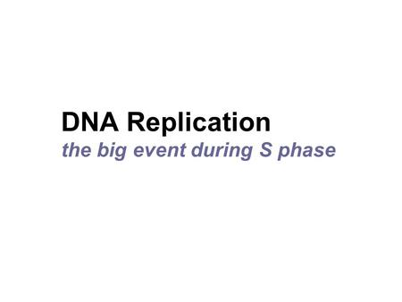 DNA Replication the big event during S phase. The Animation  hill.com/sites/0072437316/student_view0/chapter14/animations.html#
