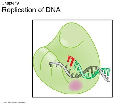 Chapter 9 Replication of DNA