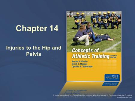 Chapter 14 Injuries to the Hip and Pelvis. Hip Motions Ball-and-socket joint Allows for a wide range of motions Musculature surrounding joint aids in.