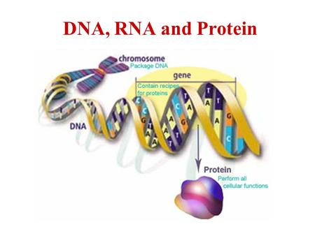 DNA, RNA and Protein. A. The Structure of DNA (Deoxyribonucleic Acid)Structure of DNA 1.DNA is double stranded and in the shape of a double helix.