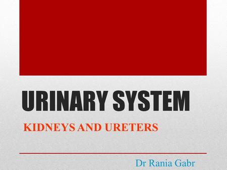 URINARY SYSTEM KIDNEYS AND URETERS Dr Rania Gabr.