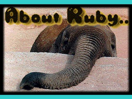 The Story of Ruby Ruby was an Asian elephant born in 1973 in a logging camp in Thailand She was shipped to the Phoenix Zoo at seven months old She became.