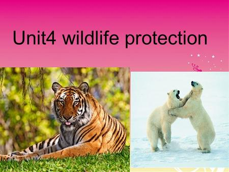 Unit4 wildlife protection South China tiger P anda Elephant Elephant Milu deer Antelope Antelope Whale.