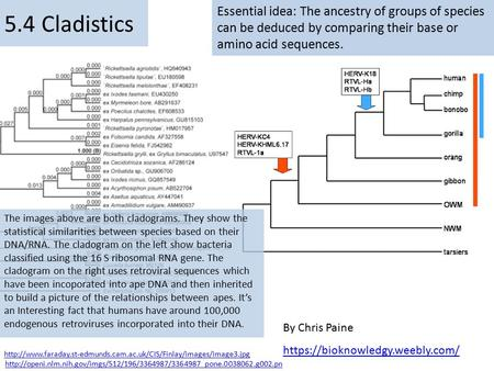 Essential idea: The ancestry of groups of species can be deduced by comparing their base or amino acid sequences. By Chris Paine https://bioknowledgy.weebly.com/