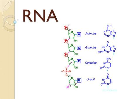 RNA. RNA RNA: Ribonucleic Acid. Takes info in DNA to create proteins DNA RNA PROTEIN.