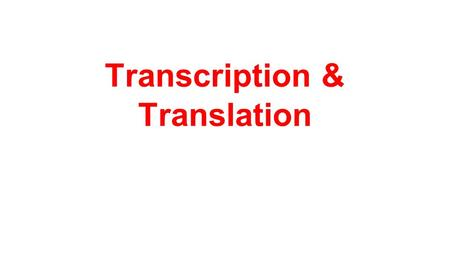 Transcription & Translation. Objectives: Relate the concept of the gene to the sequences of nucleotides in DNA Sequence the steps involved in protein.