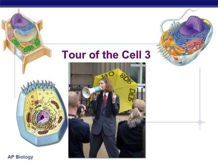 AP Biology Tour of the Cell 3 AP Biology Cells gotta work to live!  What jobs do cells have to do?  make proteins  proteins control every cell function.